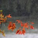 SPREMITE KIŠOBRANE Sutra u BiH kiša i pljuskovi, lokalno i do 80 litara po metru