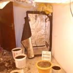 Derventa: Uzgajao marihuanu u kući