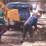 Orezivanje drvoreda u ulici Vuka Karadžića