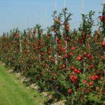 Ko zapravo koči izvoz voća i povrća u Rusiju? (VIDEO)