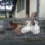 Berza sitnih životinja održana u Prijedoru