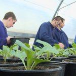 Prijedor: Učenici Poljoprivredne škole pripremaju rasad ranog povrća (VIDEO)