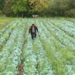 U Potkozarju uskoro sistemi za navodnjavanje na 1.200 hektara (VIDEO)