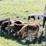 Nadomak Prijedora atrakcija: Na ranču ergela ponija (VIDEO)