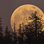 """ZOVU GA I SUPERMESEC Nebo će 1. januara obasjati """"vučji Mesec"""""""