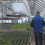 Prijedor: Podsticaji poljoprivrednicima iz budžeta grada i ove godine (VIDEO)