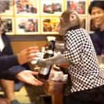 Restoran poznat po svojim konobarima: Ovdje će vas uslužiti majmuni
