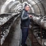Planirana proizvodnja šampinjona u RŽR Ljubija 67 tona (VIDEO)