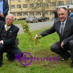 Ispred gradske uprave u Prijedoru posađena stabla JAPANSKE TREŠNJE