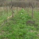 I prijedorski malinari ozlojeđeni zaraženim sadnicama (VIDEO)