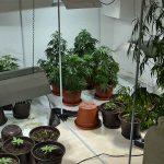 PRETRES U NOVOG GRADU U vikendici pronađena laboratorija za uzgoj marihuane, uhapšena jedna osoba