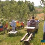 """Mala škola pčelarstva u organizaciji Udruženja pčelara """"Prva pčela"""" Prijedor (VIDEO)"""