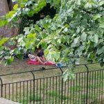 Usred bijela dana snimili orgije u parku