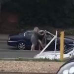 Tuča dvije vozačice nasred ulice u Velikoj Britaniji: Bacila ženu na pod i udarala je (VIDEO)