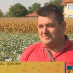 Sve više prijedorskih poljoprivrednika bavi se proizvodnjom kupusa (VIDEO)