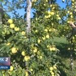 Prijedorski voćari: Povećejte otkupnu cijenu! (VIDEO)