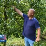 Problemi za prijedorske voćare (VIDEO)