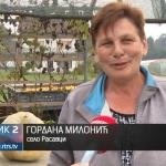 Neobičan rekord u prijedorskom selu Rasavci, bundeva od 130 kg! (VIDEO)