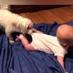 Smijeh ovih mališana će vam ulješati dan! Evo zašto svako dijete treba da odrasta uz PSA (VIDEO)