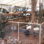Otvorena 39. Međugradska izložba sitnih životinja (VIDEO)