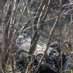"""""""Pežo"""" sletio u rijeku Željeznicu, pet osoba povrijeđeno (FOTO)"""