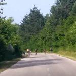 Migranti satima odbijali da izađu iz šume na Plješevici (FOTO)