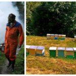 Zaprašivanje komaraca u Prijedoru, pčelari da zaštite društva