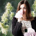 Počinje sezona alergija na ambroziju: Ovo morate da znate kako biste ublažili simptome
