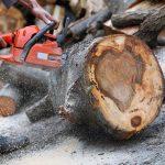 Prijedorčanin poginuo prilikom sječe drva