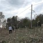 Divlje svinje uništile parcele kukuruza u Jelićkoj (VIDEO)