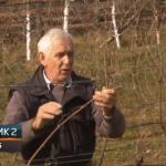 Potkozarje postaje poznato po dobrim vinima (VIDEO)