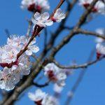 Stiglo proljeće