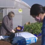 Profesori praktične nastave prijedorske Poljoprivredne škole uz podršku kolega spasili rasad povrća (VIDEO)