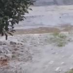 Dok se stanovnici ulice 7. septembar u Aerodromskom naselju bore sa fekalijama u kućama, načelnik Ritan radi na izradi projekta (VIDEO)