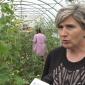 Poljoprivredna škola prodala sve što su proizveli u svojim plastenicima (VIDEO)