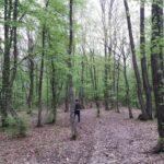 ZLOUPOTREBA SLUŽBENOG POLOŽAJA Čuvar šume dozvolio bespravan odvoz drveta