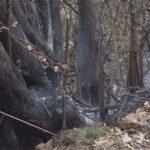 Prijedor: Gašenje šumskih požara - više od četvrtine intervencija