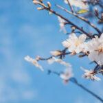 Stiže proljeće