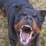 Učestali napadi pasa na građane (VIDEO)